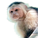 猿の社会 icon